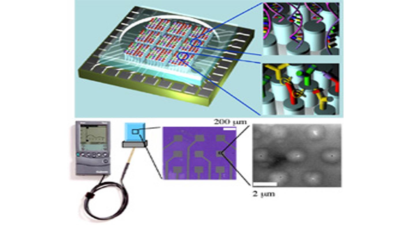Magnified carbon nanotube nanoelectrode array